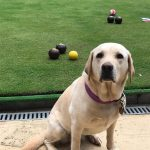 image shows Clare's Guide Dog Maggie